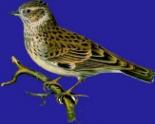 Логотип компании Жаворонок